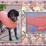 patron couture pour chien